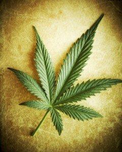 Cannabis-Leaf-240x300