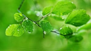 new leaf water drops